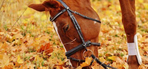 cheval-bridon-equitation