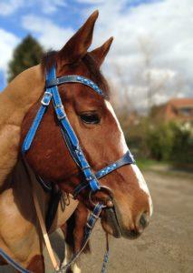 bridon équitation bleu