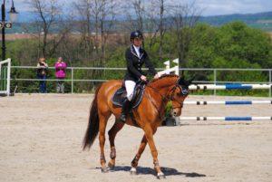 cavalier et cheval équipement équitation de concours