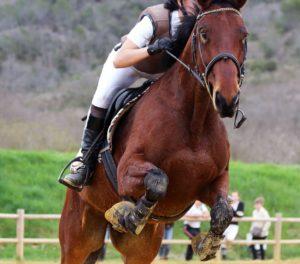 Pantalon équitation blanc et saut d'obstacles